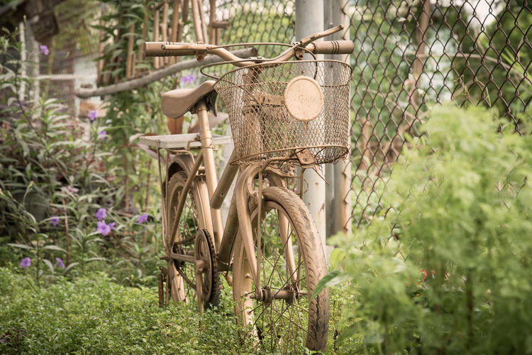 Plant Basket Day Nature Transportation Tree Focus On Foreground No People Growth Outdoors Fence Mode Of Transportation Green Color Bicycle Land Boundary Barrier Land Vehicle Wood - Material Container