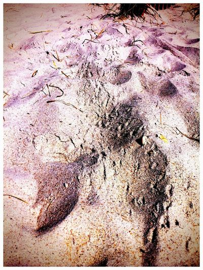 Crab trax Check This Out Crab Color Photography Sand Beach Enjoying Life Footprints Popular Photos Check This Out Ocean