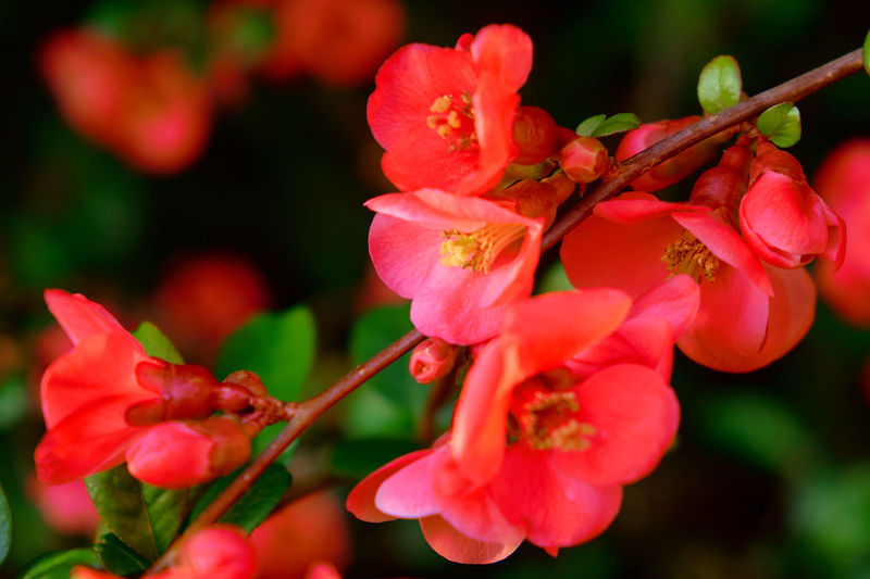 Close-up of red flowering plant in park