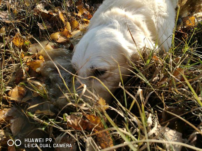 Nature Mydog Dog Life Paseggiata Ioetesempreinsieme