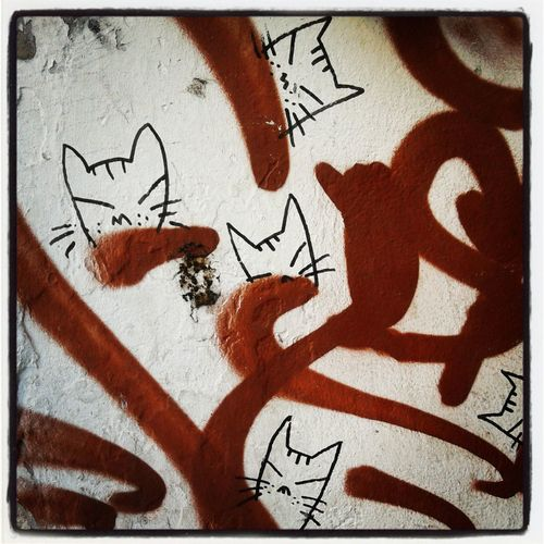 Kitty Street Art »^o^« Cats Arte Callejero Latinaencph