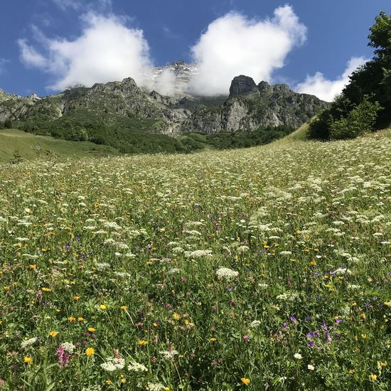 Hiking Alps Beauty In Nature Cloud - Sky Day Environment Field Flower Flowering Plant Green Color Growth Hikingadventures Land Landscape Mountains Nature No People Non-urban Scene Outdoors Plant Scenics - Nature Sky Tranquil Scene Tranquility