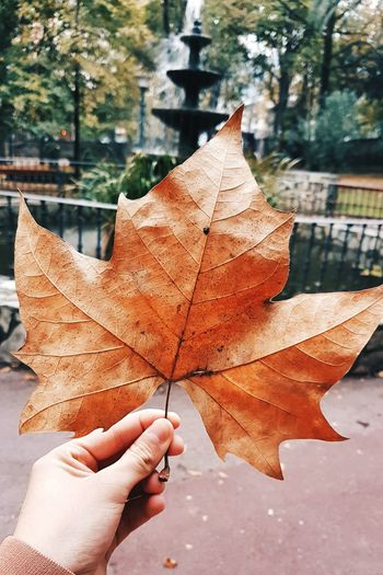Autumn Human Hand Leaf Human Body Part One Person Change Holding Real People Human Finger Outdoors Maple Leaf Day Close-up Nature Lifestyles Tree