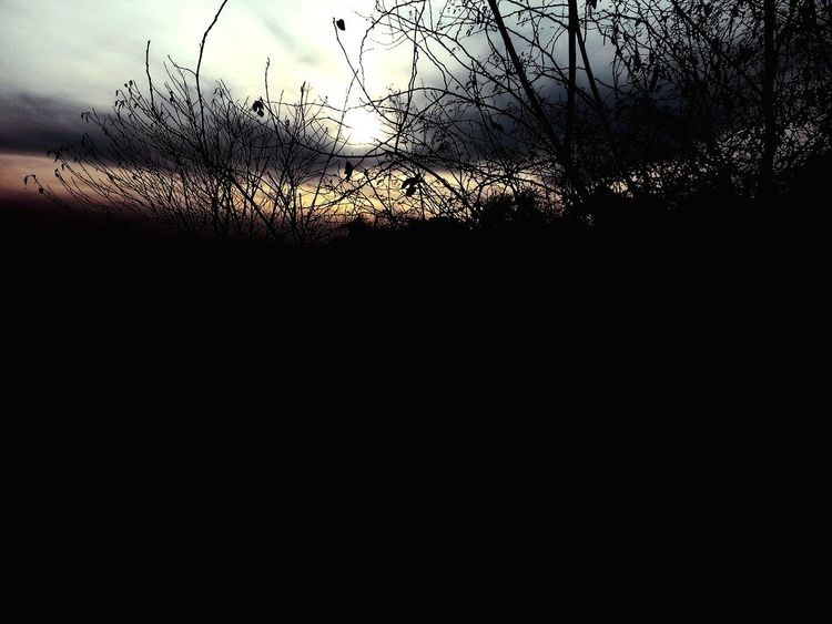 Not sacred of the forest are ya? Clouds And Sky The Dark Forest Haunted Eye4photography  Open Edit