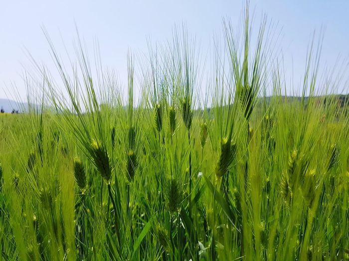 Field Grass Nature Green Color