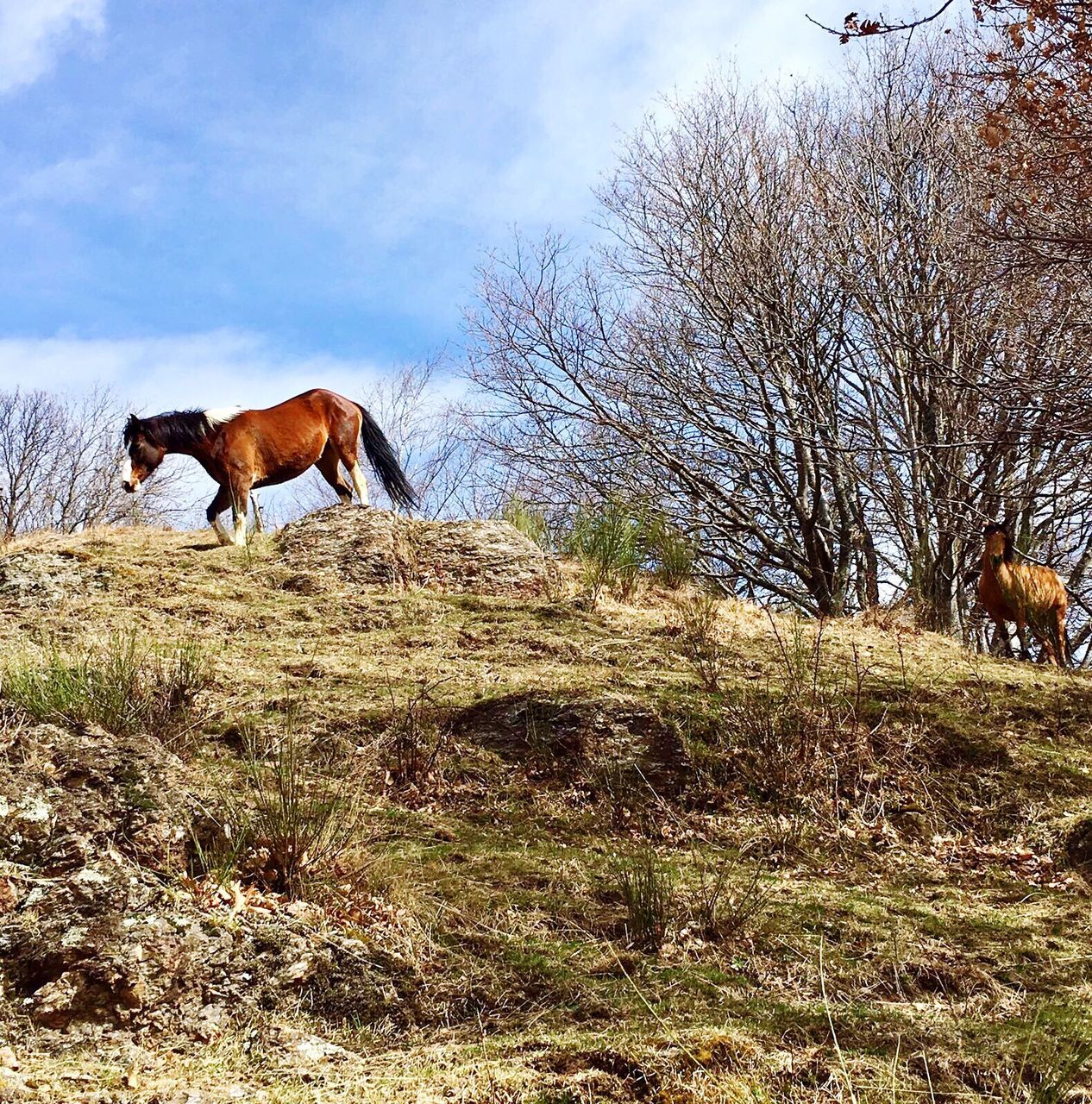 domestic animals, animal themes, horse, one animal, mammal, grass, field, sky, nature, bare tree, tree, day, outdoors, livestock, landscape, no people, beauty in nature