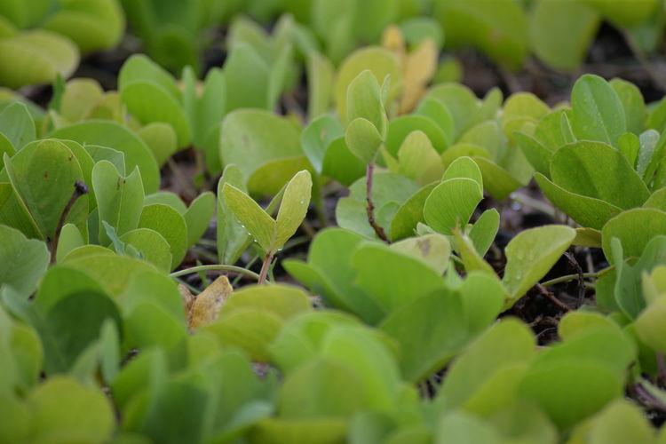 Close-up Fern