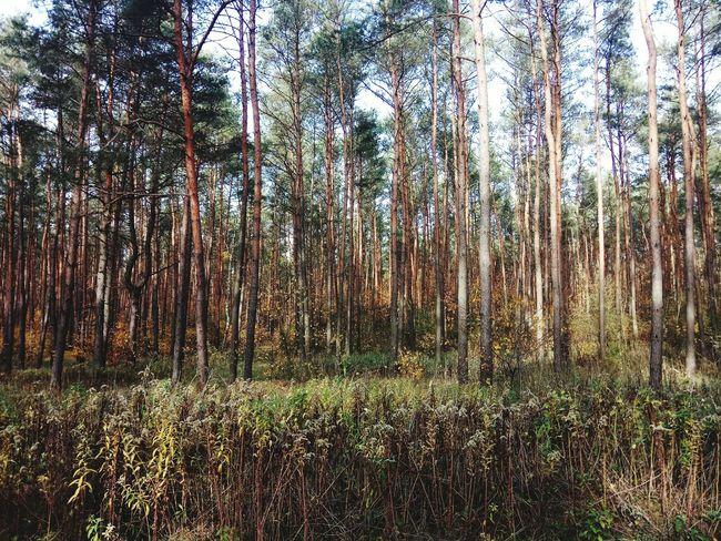 Goldpolishautumn Forest Tree Backgrounds Full Frame Grass Sky Close-up