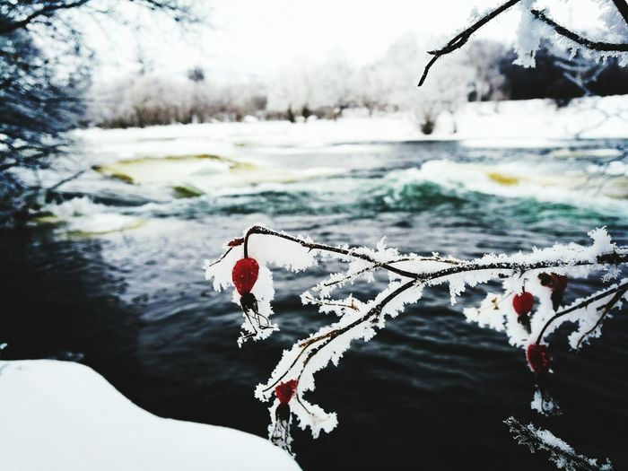 Snow kamchatka