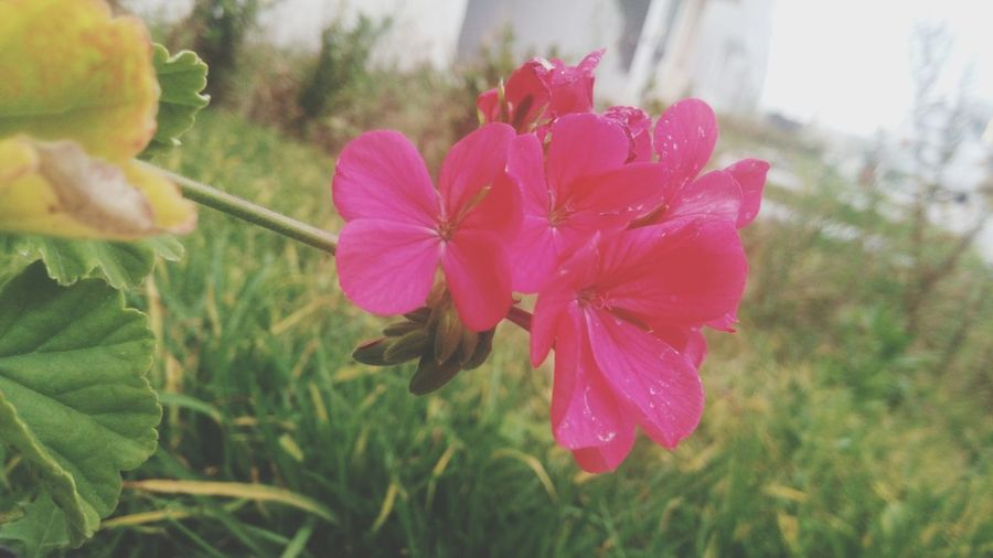 Pink and not like the life. Nature Flower Pink
