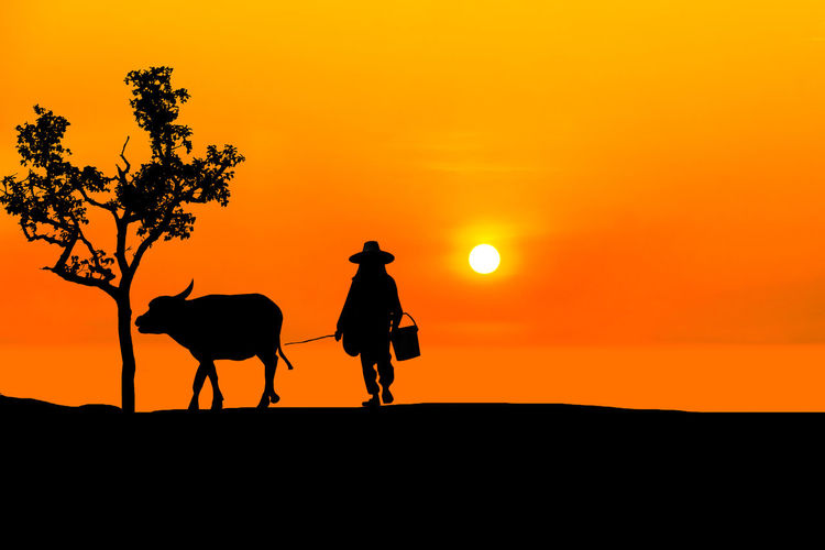 Silhouette Asian farmer raising buffalo at farm Sunset Silhouette Sky Orange Color Mammal Animal Themes Domestic Animals Animal Domestic Vertebrate One Animal Beauty In Nature Livestock Pets Animal Wildlife Real People One Person Nature Land Scenics - Nature Riding Outdoors Herbivorous Cowboy