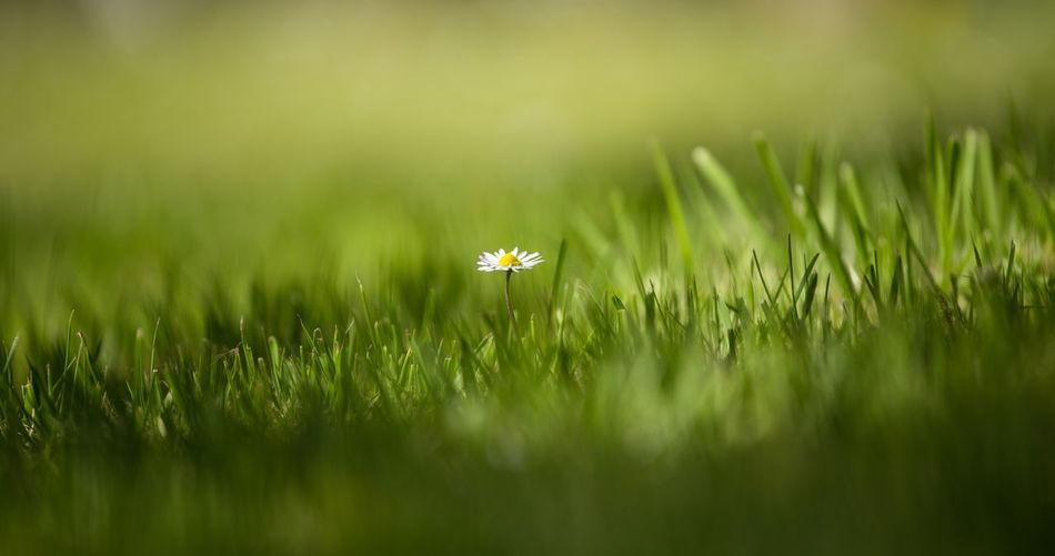 Grass growing on grassy field
