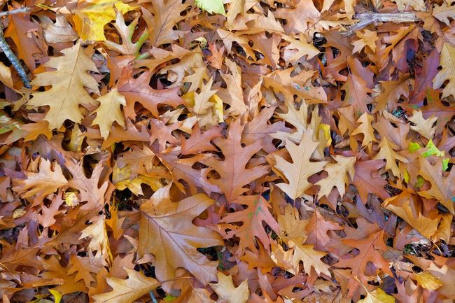 Autumn leaves Full Frame Autumn Leaf Plant Part No People Beauty In Nature Nature Backgrounds Day Close-up Leaves Dry Natural Pattern Yellow