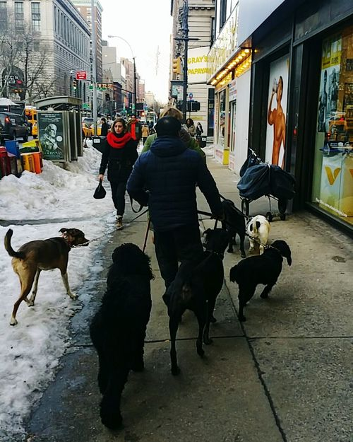 Dog Walker Hanging Out Taking Photos Check This Out Enjoying Life Manhattan New York City The Street Photographer - 2017 EyeEm Awards Neighborhood Map