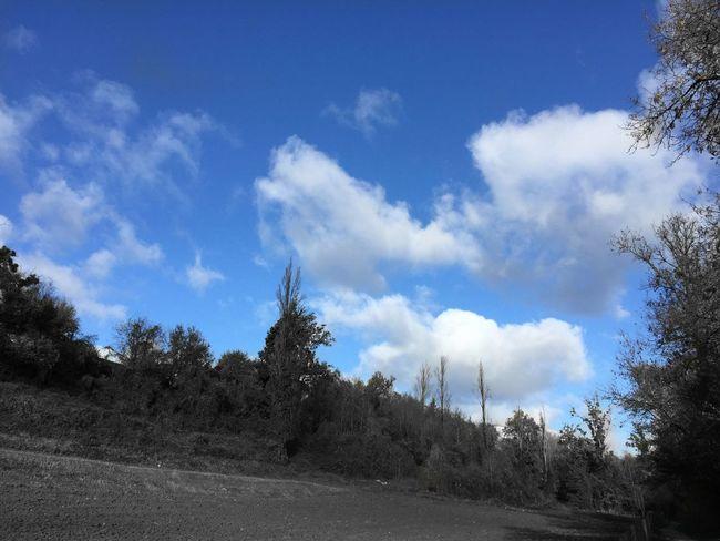 Paysage de Charente Paysage Charente Hello World CIELFIE Skyfie Ciel Sky