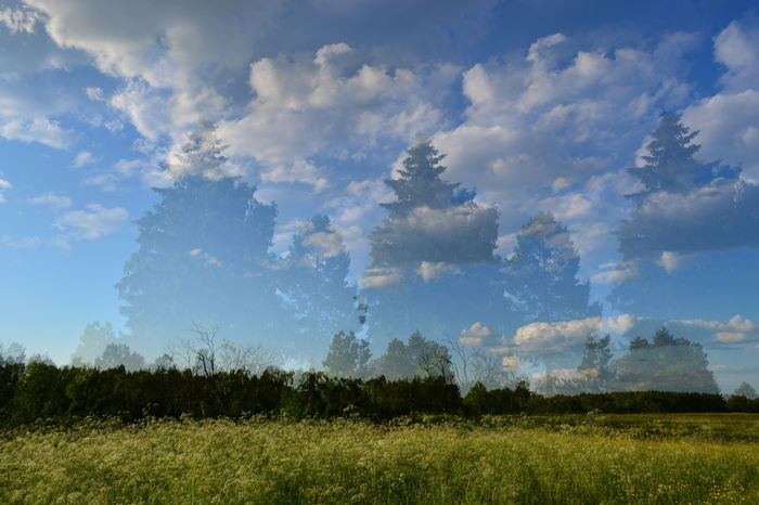 Beauty In Nature Blue Cloud Cloud - Sky Cloudy Composition Day Dubleexposure Field Grass Grassy Green Color Growth Idyllic Landscape Multiexposure  Nature No People Non-urban Scene Outdoors Plant Scenics Sky Tranquil Scene Tranquility