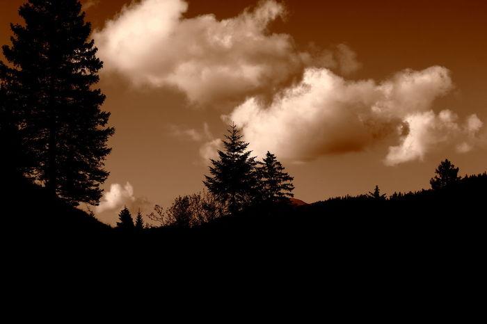 Menace and reassurance Baum Beauty In Nature Bedrohung Beruhigung Black Blackandwhite Cloud Cloudy Contour Contrast Feld Field Himmel Kontrast Landscape Landschaft Menace Reassurance Schwarz Schwarzweiß Silhouette Sky Tree Umriss Wolken