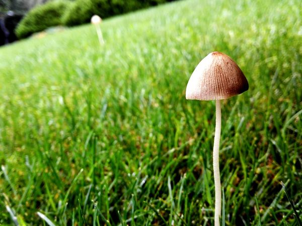 After Rain Mushrooms Grass Grassland On The Way To Work Morning Streetphotography Discover Shanghai Eye4photography