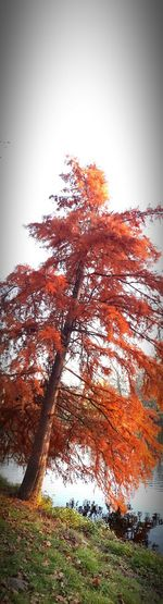 Landscape_Collection Autumm 2015 On My Way Leaves Tree_collection  Vertical Panorama Autumn Leaves