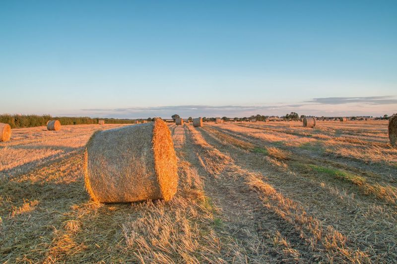 Field Bale  Agriculture Hay Landscape Tranquility Outdoors No People Clear Sky Rural Scene Tranquil Scene Nature Day Beauty In Nature Hay Bale Scenics Sky Grass
