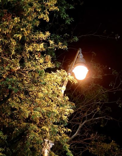Illuminated lamp by trees against sky