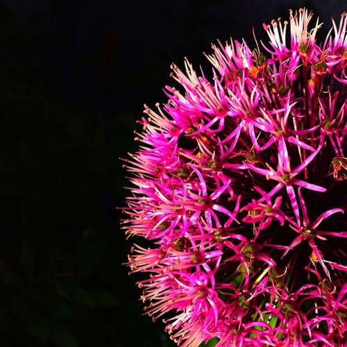 Flowers Nature Pink 花