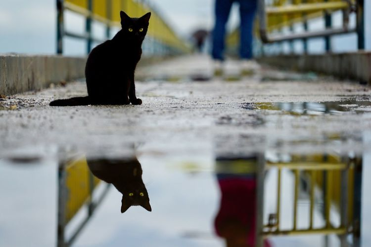 Portrait of black cat sitting by water with reflection