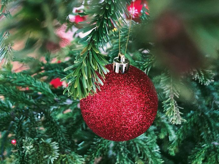 Christmas decoration 🎄... Branch Lifestyle Wintertime Season  Glitter Winter Christmas Ball Globe Globe - Man Made Object Bauble Christmas Tree christmas tree Celebration Christmas Decoration Holiday Decoration Green Color Holiday - Event Hanging Christmas Ornament Plant Nature Celebration Event Coniferous Tree Fir Tree Red Close-up Religion No People