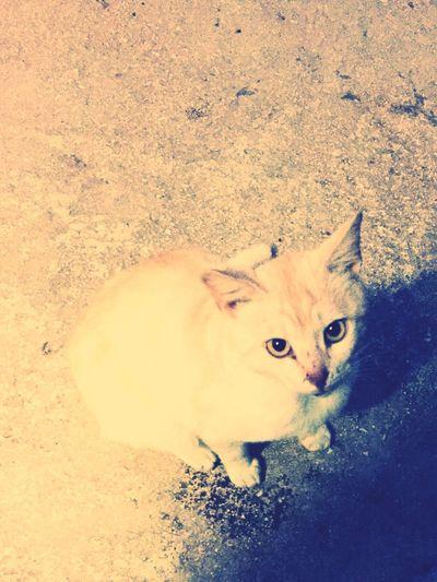 Cat Cat♡ Cats Animals Cute Cats