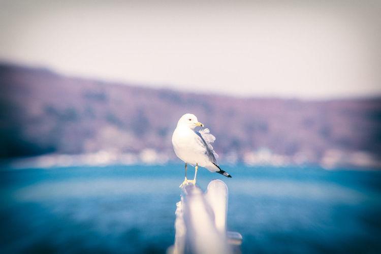 One Animal Bird