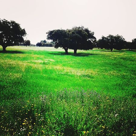 Green Color Agriculture Tree Nature Field No People Beauty In Nature