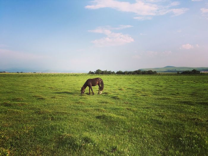 Horse grazing on field against sky