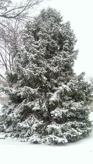 white Christmas tree. White Christmas Tree Snowfall Cold Winter ❄⛄