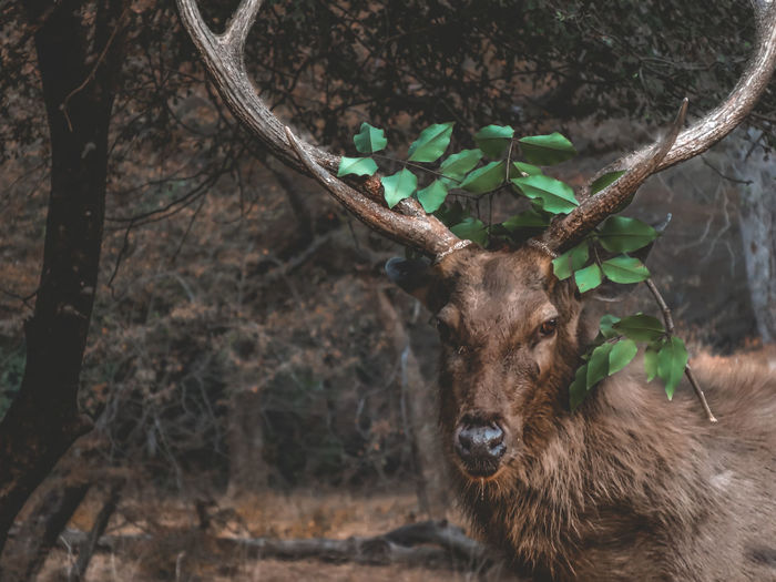 Portrait of deer in a forest
