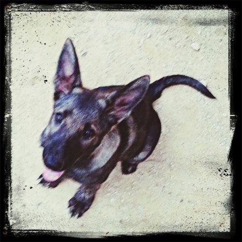 I like my dog. Dog Dogschool Dog Name Dog Trainer