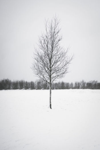 Branches Stavanger Tree White Out Winter Lonely Tree Sky Snow White Background