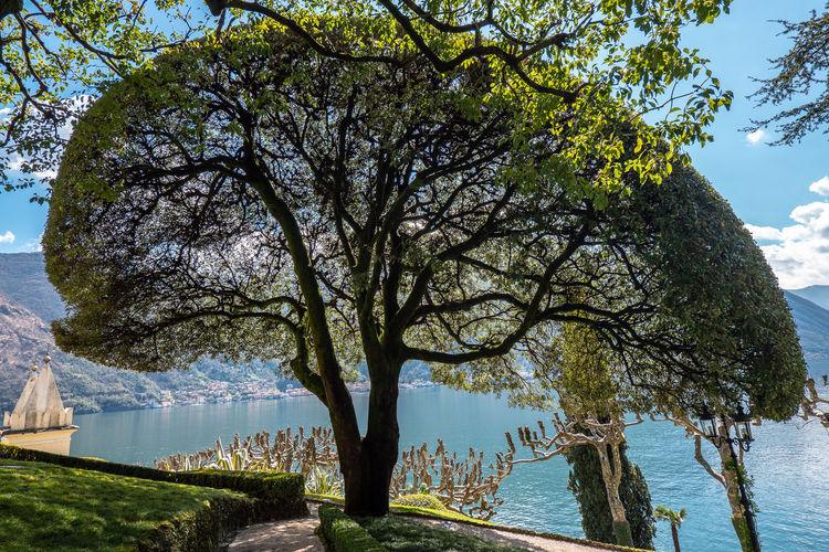 Tree Plant Nature Sky Lake Villa Del Balbianello Beauty In Nature Sunlight No People Sea Scenics - Nature Outdoors Spring
