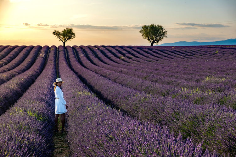 Portrait of woman standing on flower field against sky during sunset