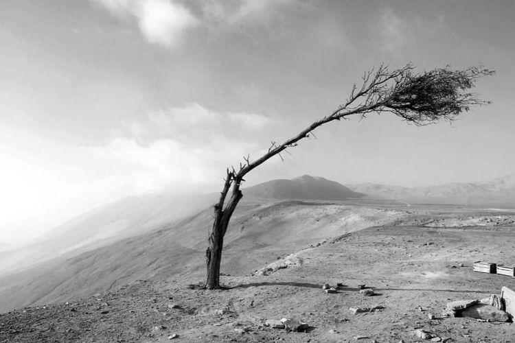 Loneliness... Blackandwhite Paisajes Desert
