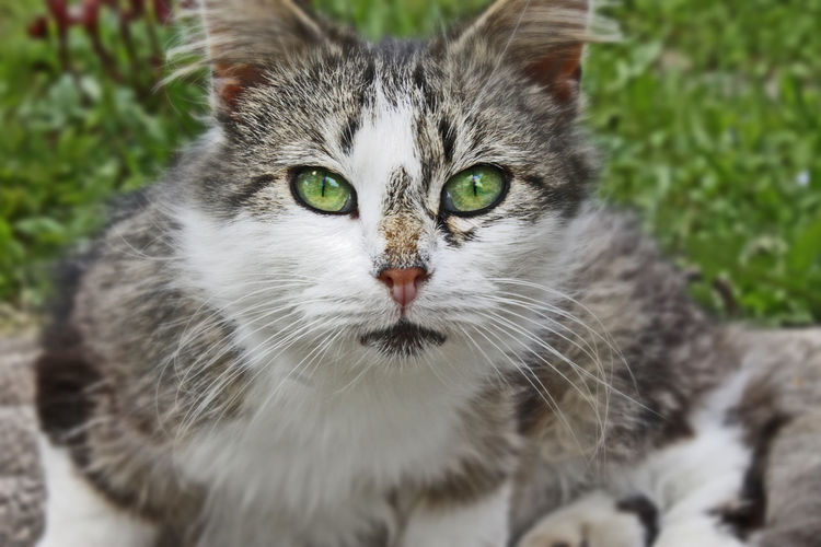 Domestic Cat Pets Portrait Looking At Camera Animal Themes Outdoors Nature Close-up Mammal Cat Green Color Green Eyes Grass Furry Mur EyeEmNewHere