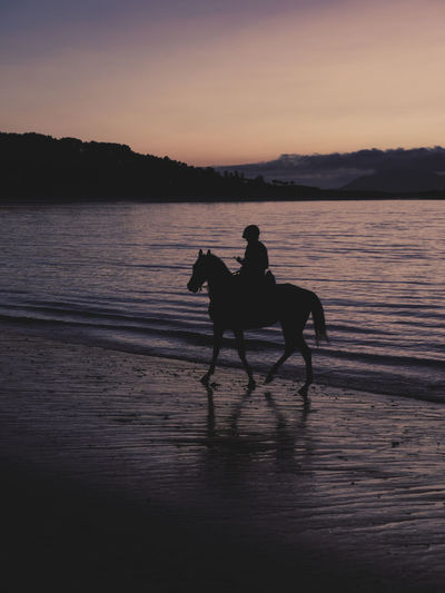 Silhouette man riding horse on beach at sunset