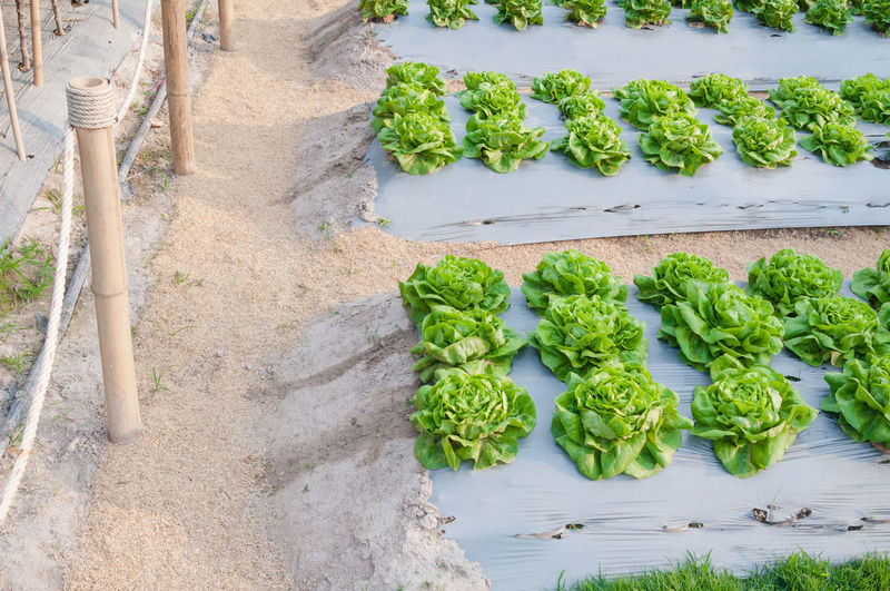 High angle view of vegetables on field