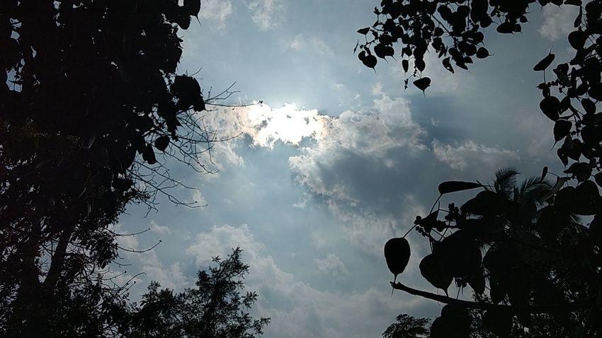 Sun Tree Sky Cloud - Sky Branch