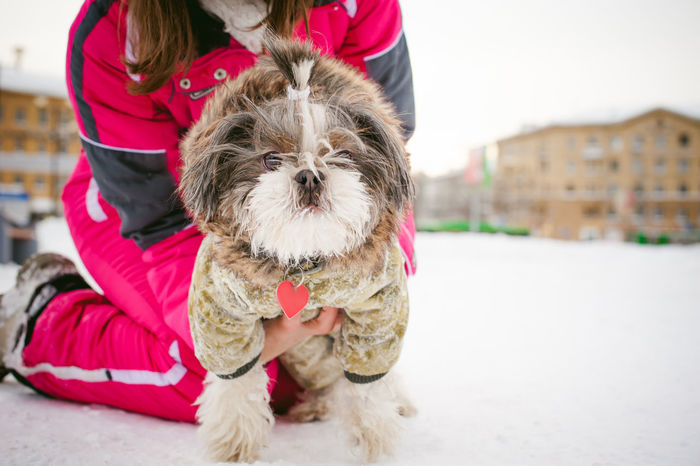 Adult Adults Only Animal Themes City Day Dog Domestic Animals Focus On Foreground Friendship One Animal One Person Only Women Outdoors People Pets Shih Tzu West Highland White Terrier Young Adult
