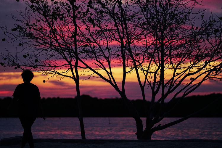 Silhouette person standing by bare tree against sky during sunset
