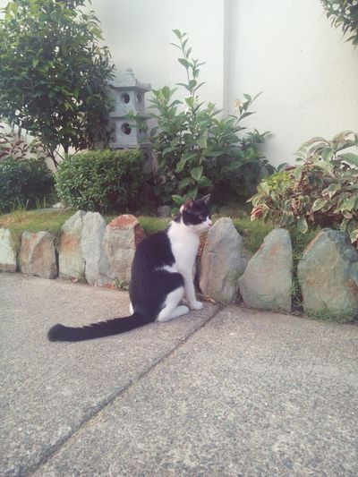 The plant guardian. Pet Cat Skippy Moments Memories Animal Animal Photography Animallovers PhotoDiary