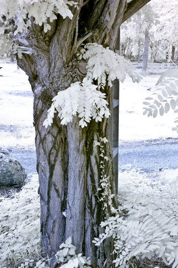 Snow covered land by trees