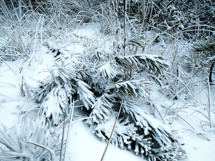 Winter Cold Temperature Snow High Angle View No People Backgrounds Day Nature Frozen Full Frame Outdoors Beauty In Nature Close-up Frosty Nature Beauty In Nature Snow ❄ Frosty Grass Wintertime Winter Textured  Frosted Glass Nature Frosty Trees Pine Trees Frosted Nature Shades Of Winter