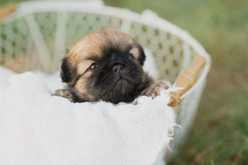 Close-Up Of Puppy Resting In Basket