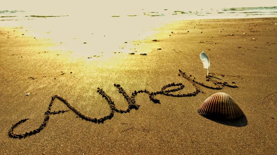 No Distance No Time Enlesslove Always In My Mind  She Always Sea Sand Shell Beach Seagull Feathers